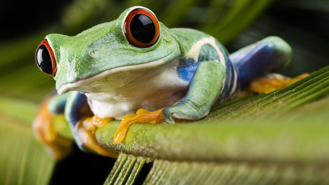 13-12-24-michael-berg-the-consciousness-of-the-frog