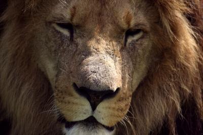 ראש חודש אב - מזל אריה